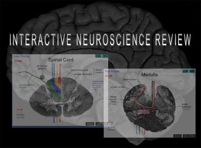 Cindy Montana's Interactive Neuroscience Review (powerpoint)