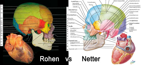 Head To Comparison Rohen Vs Netter Anatomy Atlas Books