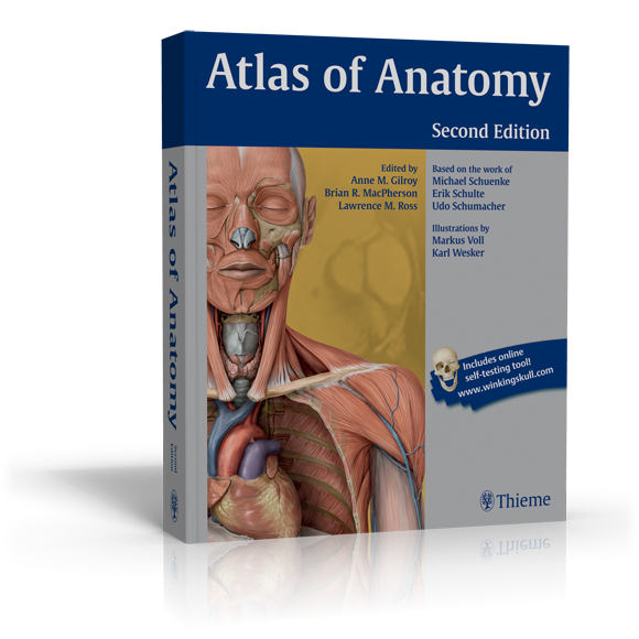 Gilroy's Atlas of Anatomy by Thieme